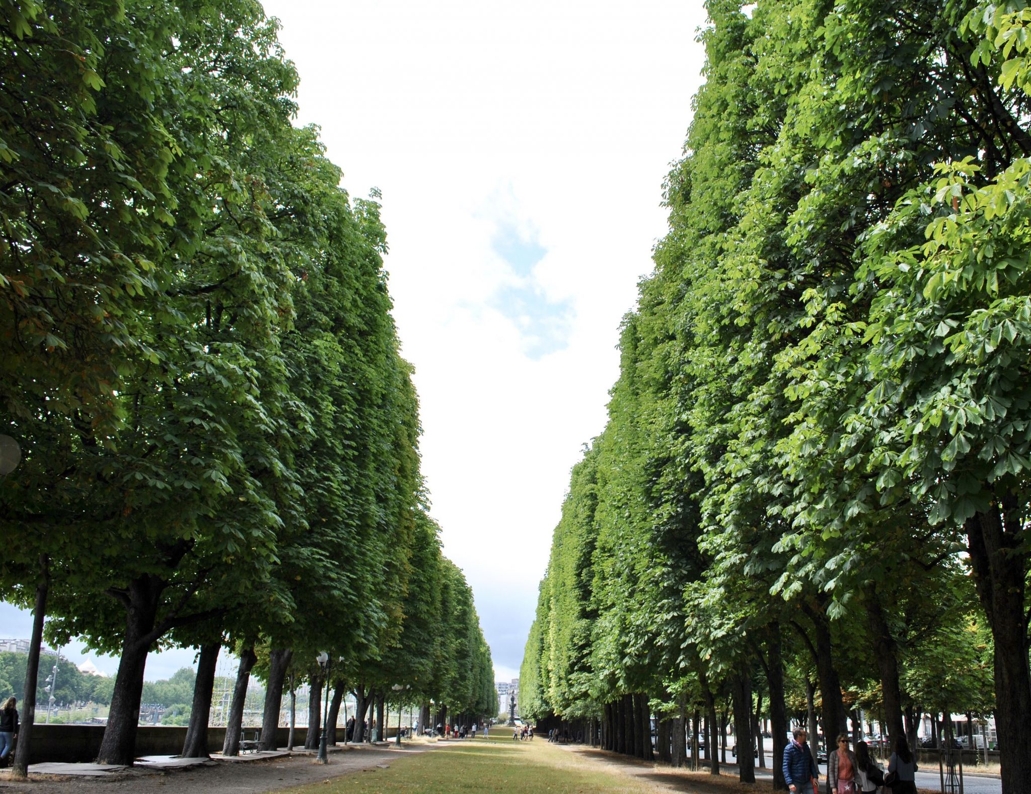 Tree-lined boulevards along the Seine