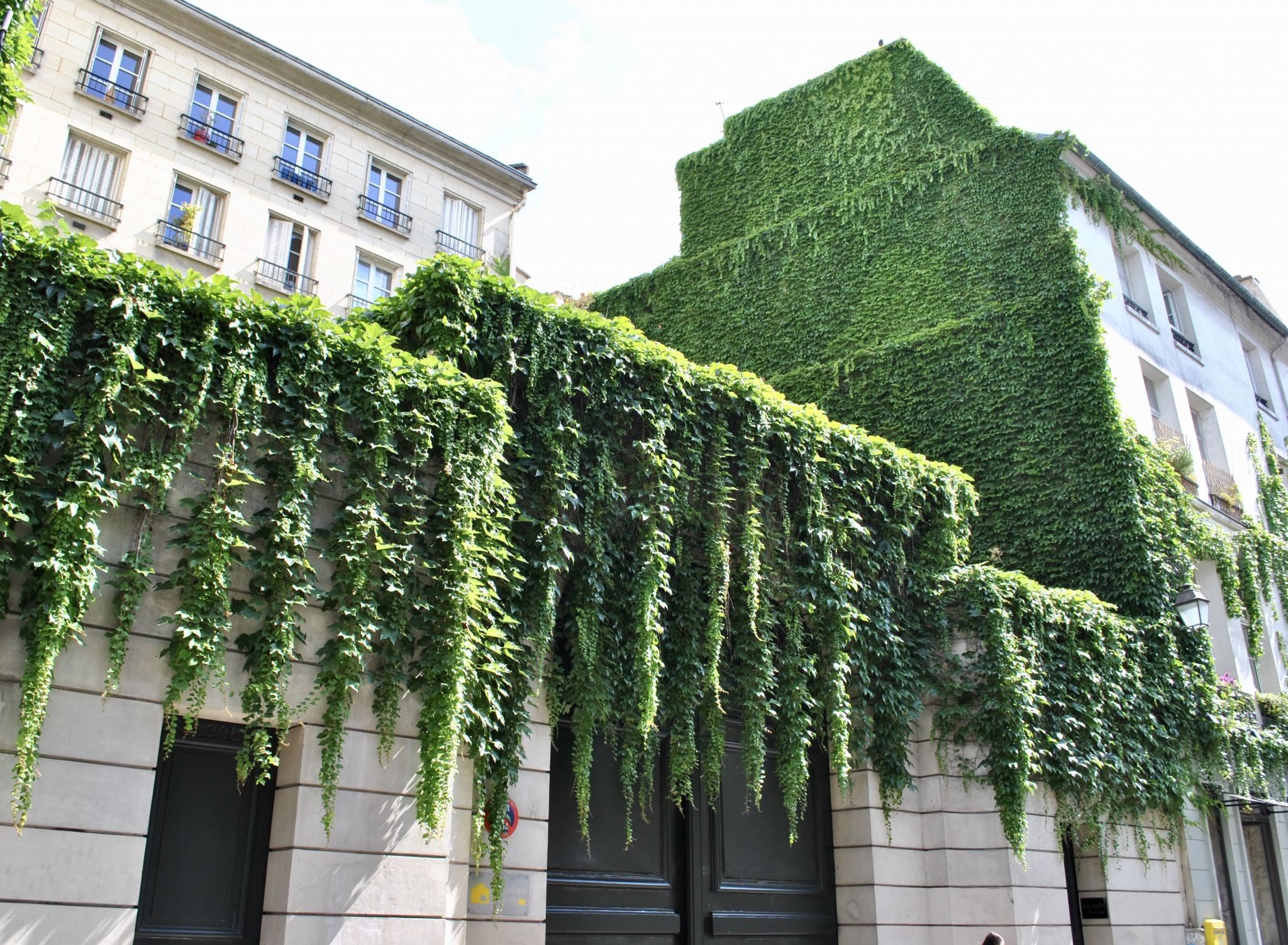 Ivy clad buildings